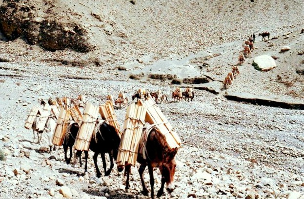 mules carrying building materials